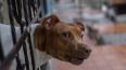 Собака напала на 9-летнюю девочку в Выборгском районе