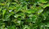В Волховском районе мужчине дали штраф за сорняки