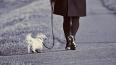 В Ломоносове пенсионерка ушла гулять с собакой и погибла