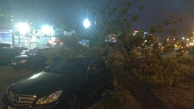 Поваленные ветром деревья убрали с улиц Петербурга