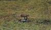 Любопытная сова и кровожадный сокол появились в Петербурге
