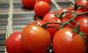 Около 12 тонн марокканских томатов не прошли фитосанитарный контроль в Петербурге