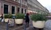 Садовники Петербурга принялись за украшение города: на улицах появится более 4 тысяч елей