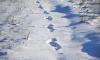 В Ленобласти лыжник натолкнулся на вмерзшего в лед мертвеца
