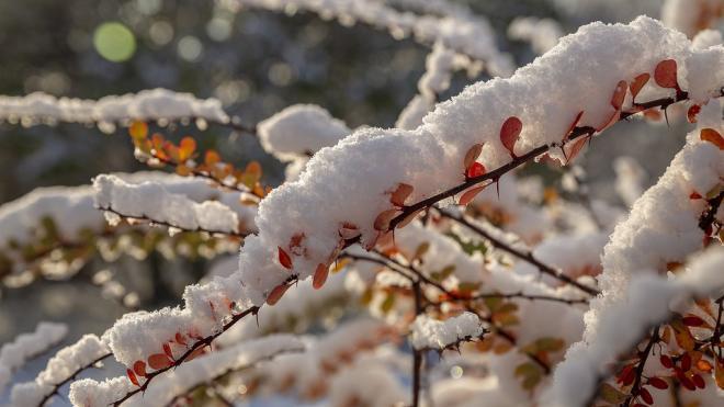 Петербуржцев ждут морозы и гололедица в четверг