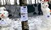 Снеговики вышли на защиту Муринского парка