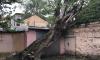 Специалисты Ленэнерго полностью восстановили поврежденные в результате шторма электросети