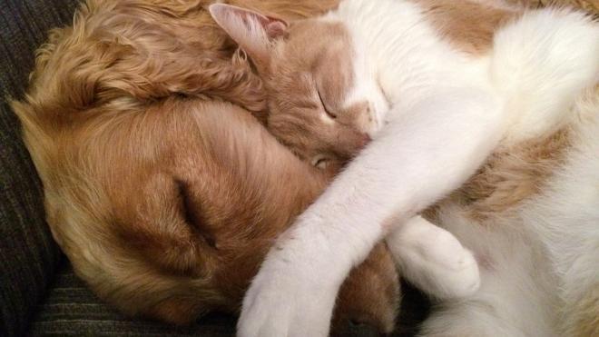Петербуржцы стали чаще покупать кошек и собак на самоизоляции