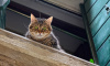 Петербурженка выпала из окна девятого этажа из-за кошки