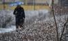 Синоптики: циклон уходит из Петербурга, остаются осадки и гололёд