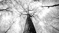 В лесу нашли тело пропавшего без вести жителя Авиагородк...