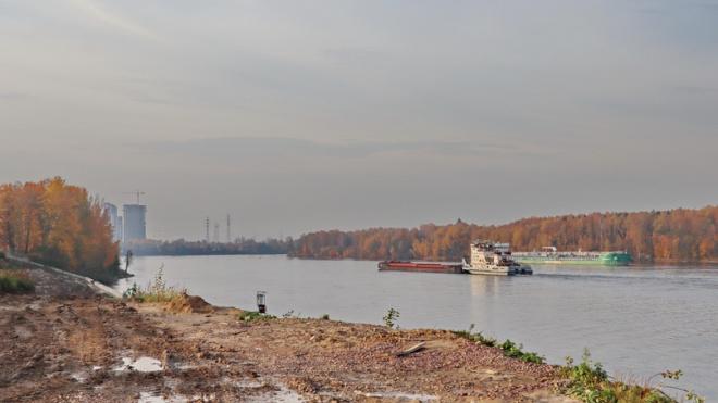 На облысевший берег Невы в Усть-Ижоре пообещали вернуть срубленные при ремонте деревья