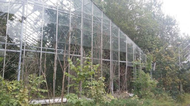 В заброшенных теплицах Таврического сада может появиться каток