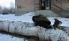 Петербургский бомж умер в Александровской больнице от переохлаждения
