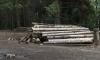 Северная добывающая компания заплатит 185 000 рублей за неочищенные лесосеки