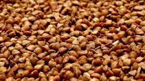 Диетолог рассказала россиянам о вредных свойствах гречки и риса