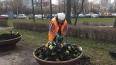 Первые цветы в Петербурге высадили на Васильевском ...