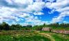 В Ленинградскую область вернулось лето