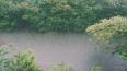 Петербуржцам придется потерпеть мокрую и прохладную ...