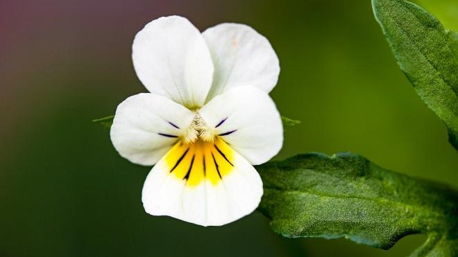 На Стрелке Васильевского острова высадили более 45 тысяч цветов