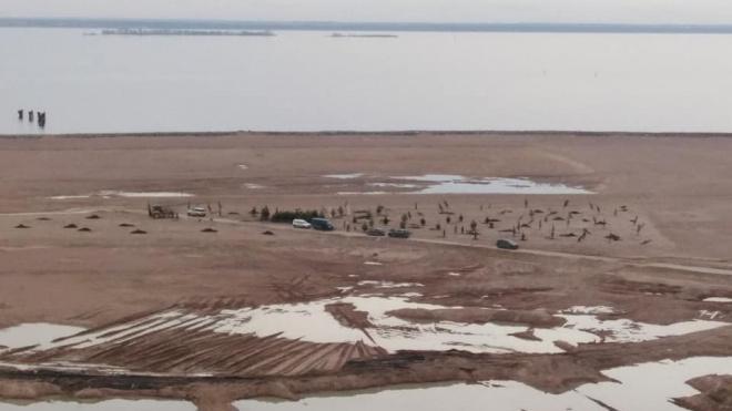 На намывных территориях Васильевского острова высадили первые елки