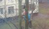 На Ленинском проспекте с высокого дерева сняли котика