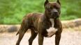 Убитый каратистом владелец бойцовой собаки оказался ...