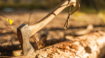 За восемь срубленных елок петербуржец может сесть ...