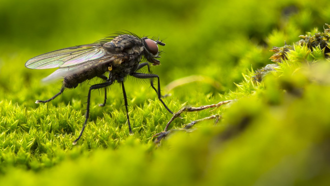 Рис из Вьетнама не пропустили в Петербурге из-за личинок мух