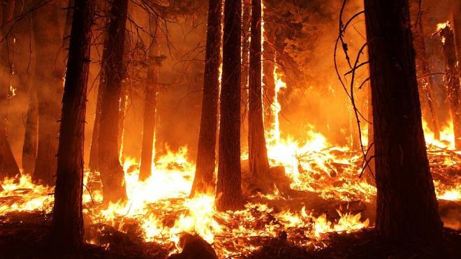 Эксперт поддержал идею возложить ответственность за тушение лесов на региональные власти