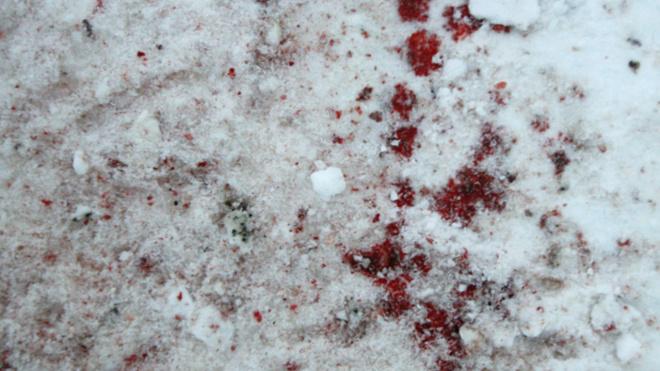 В Омске несовершеннолетняя школьница с любовником жестоко убили мать девушки