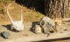 Старинные артефакты и кости приостановили строительство трассы М-11 в Ленобласти