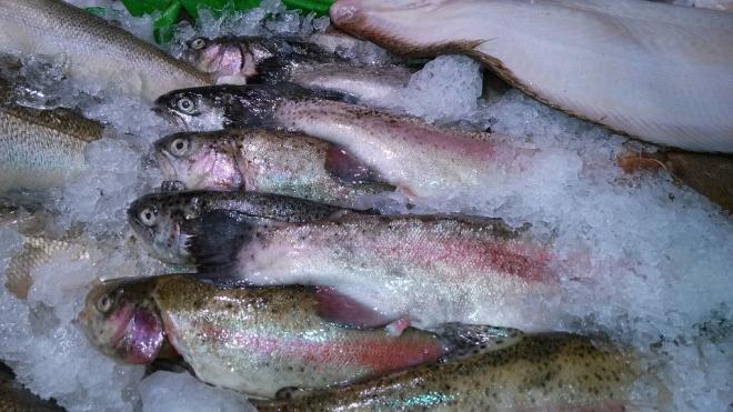 В Петербург не пустили рыбу из Белоруссии