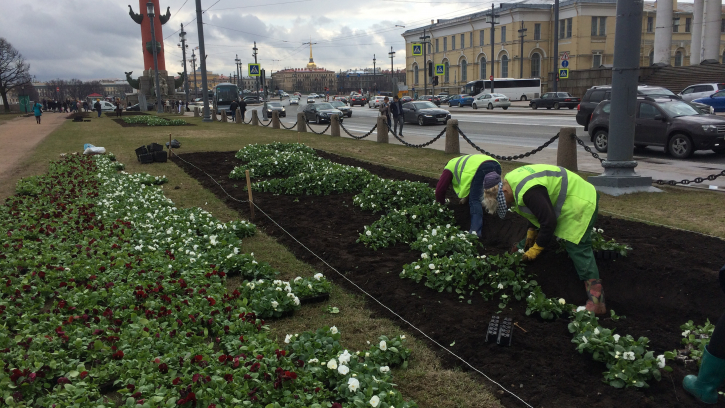 Петербургские садовники начали украшать город к майским праздникам