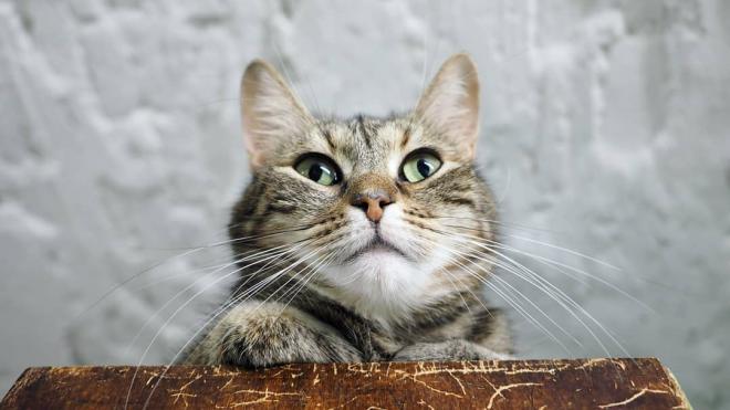 Французский меценат включил эрмитажных котов в свое завещание