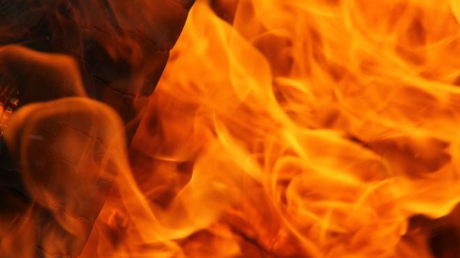 В Полежаевском парке чуть не сожгли заживо двух бездомных