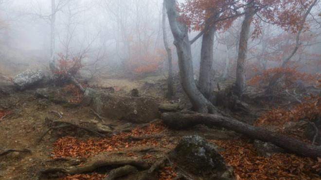 В Ленобласти на берегу реки в спальном мешке нашли мужчину, который пропал 6 лет назад