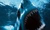 Акула съела французскую школьницу-серфингистку