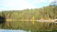 УФАС: конкурс на создание экопарка в Петербурге следует ...