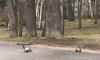 В Удельном парке неизвестные перестреляли ворон