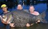 Мужчина поймал в Паттайе гигантскую рыбу весом 105 килограммов
