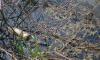 За неделю от мусора очистят 216 прудов и рек Петербурга