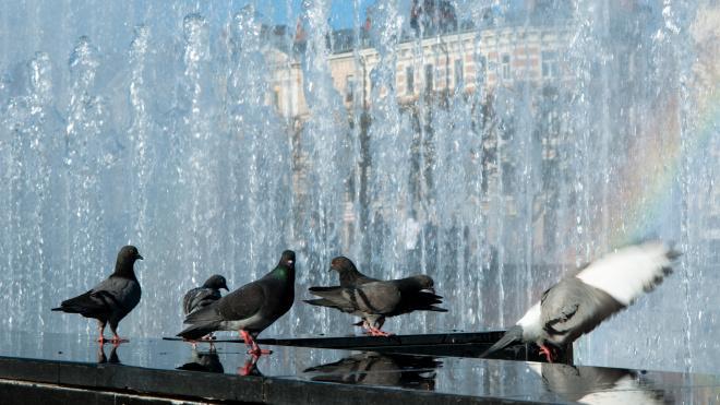 Утвержден график работы светомузыкальных фонтанов в Петербурге