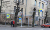 На улицах Выборга начали обрезку лип