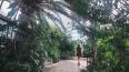В оранжерею Таврического сада вернулось тепло