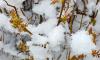 Выборг занесло снегом