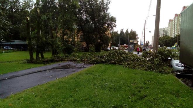 На Бестужевской улице упали три дерева, одно из которых придавило машину