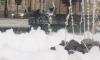Хулиганы серьезно повредили фонтан на Манежной площади Санкт-Петербурга