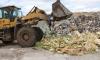 В Петербурге под колесами трактора уничтожили 6 тонн санкционных фруктов и овощей