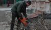 В Румянцевском саду в Петербурге вырубят 72 дерева